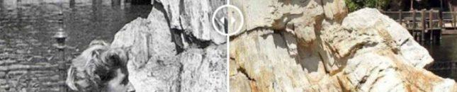 Petrified Tree | WaltsApartment.com